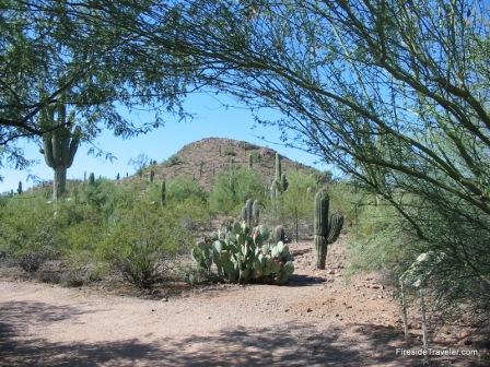 Botanical Garden Phoenix