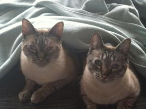 Jack and Juno Under blanket