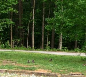 Herd of Squirrls