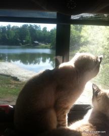 Cats in North Carolina